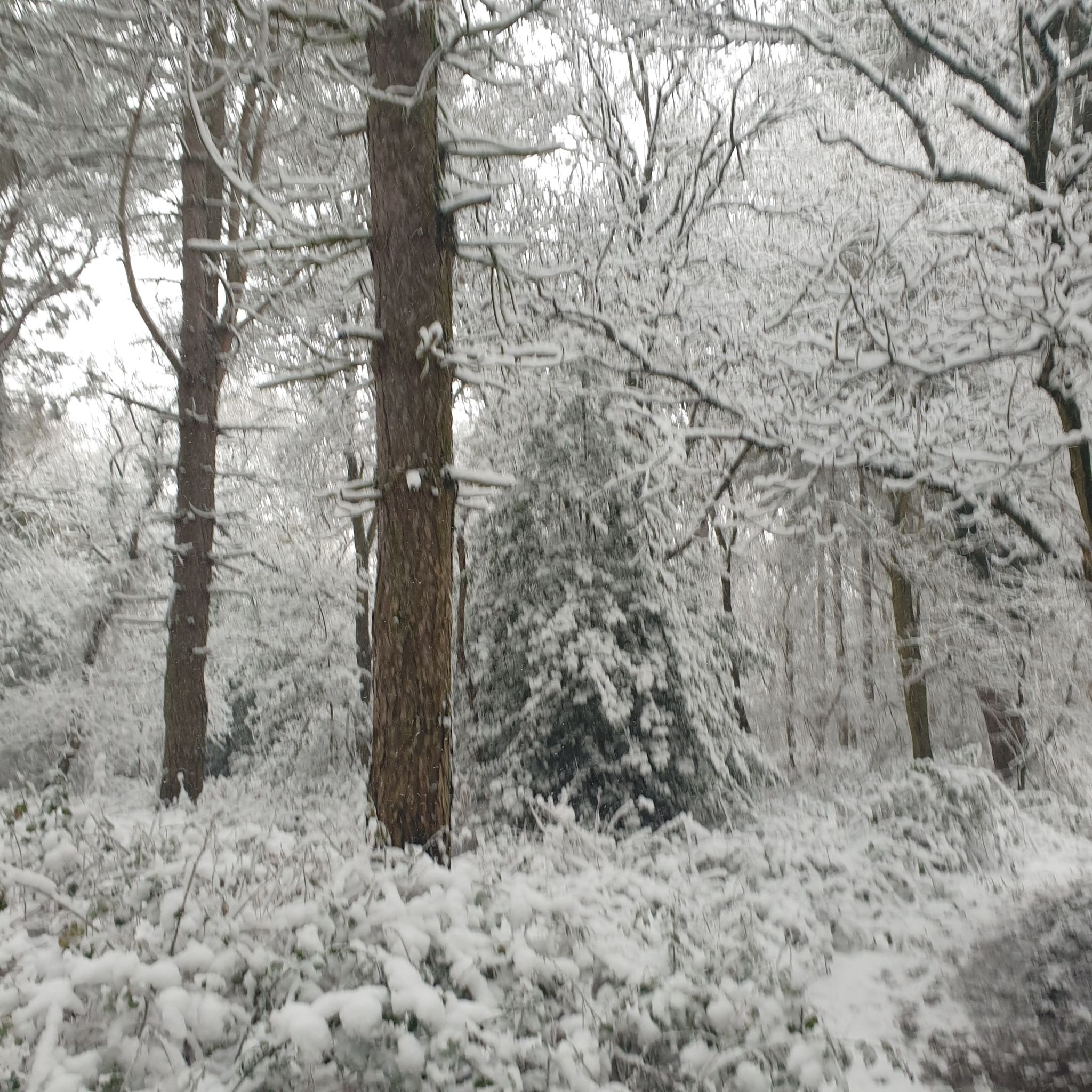 FRIDAY WOODS COLCHESTER SNOW 7-2-21 (M JONES)